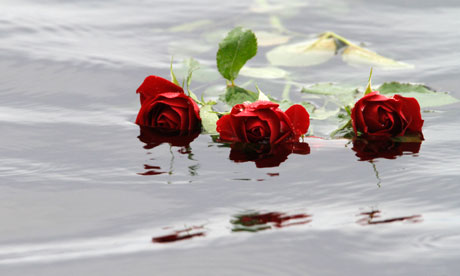 Red-roses-float-in-water--007