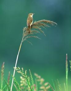 small-bird1