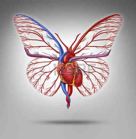25957448-heart-organ-shaped-as-a-butterfly-with-wings-flying-up